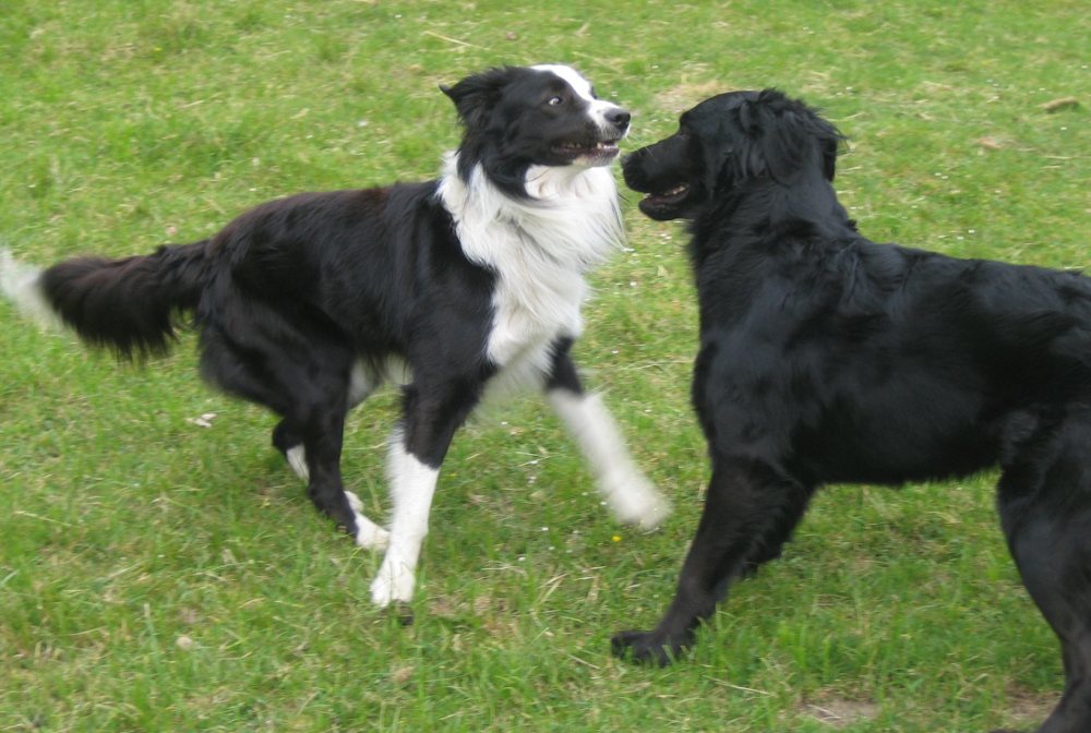 Seminare - Hund Im Fokus
